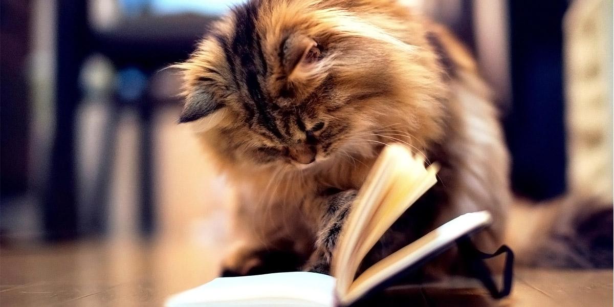 kediler-fizik-felsefe-ve-edebiyat