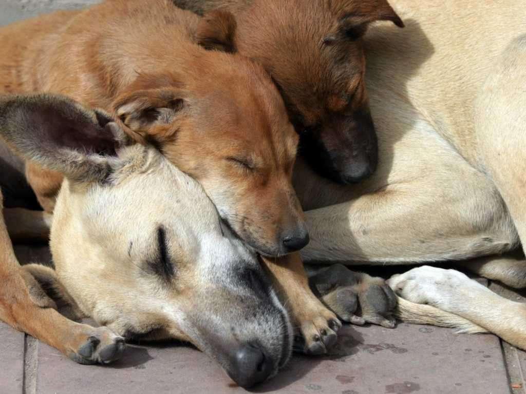 Davranış nedir Hayvanlar ve insanlar davranışı